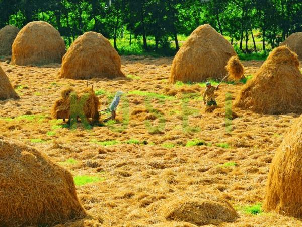 luoc-chai-toc-bao-ve-moi-truong-tu-rom