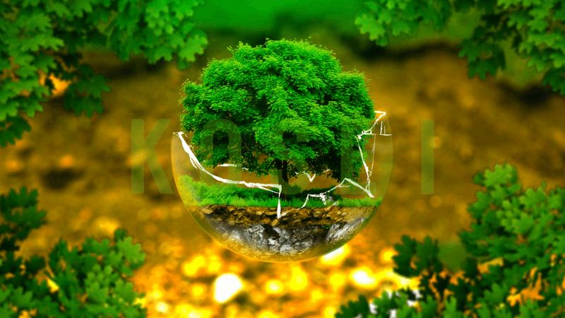 cách để bảo vệ môi trường